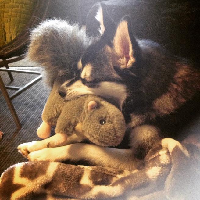 Gigi & her squirrel stuffie