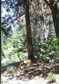 Bambi (taken before evacuation)